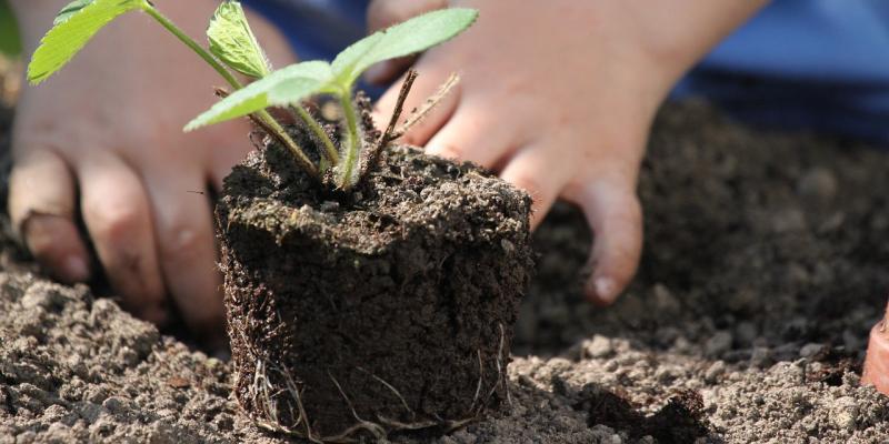 Kertészkedés gyerekekkel - Előnyök, ötletek, versek, mesék