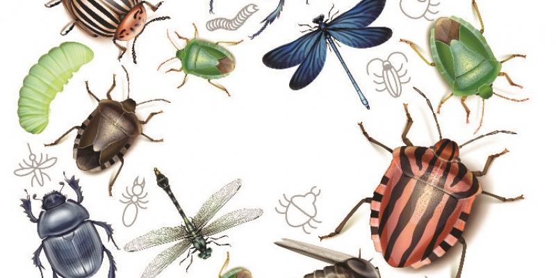 Játékok és kézműves ötletek a rovarok, bogarak témakörhöz