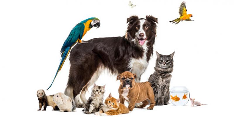 Mókás játékok az Állatok Világnapjára